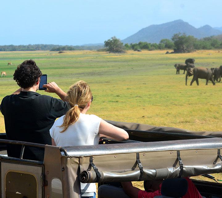 Minneriya safari from Kandy day excursion
