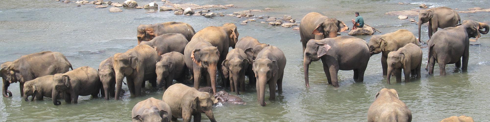 A day with elephants sri lanka