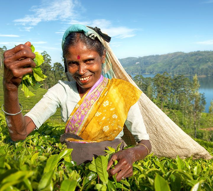 Sri Lanka, Tea estates, picker
