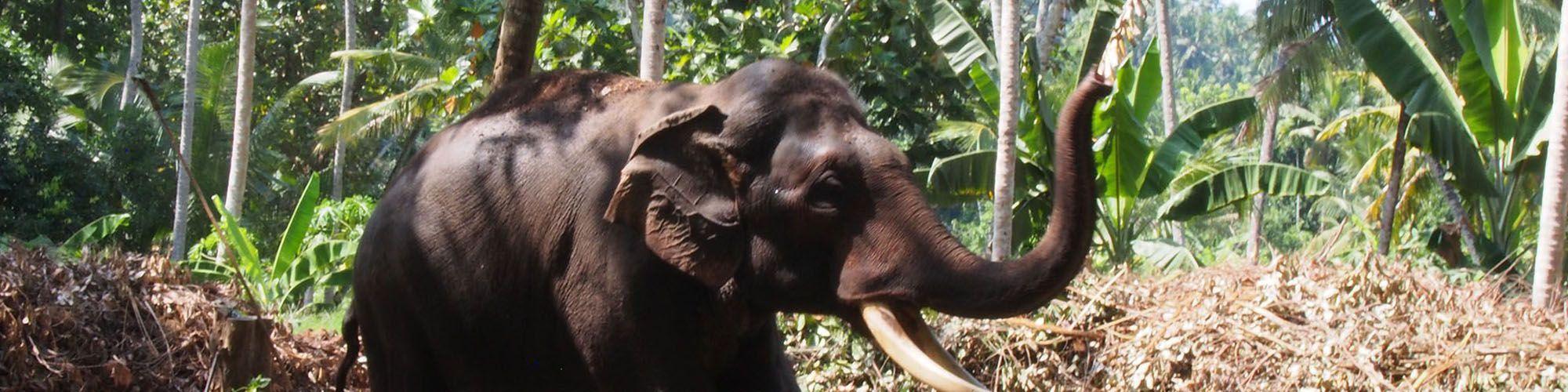 Sri Lanka, Elephant Walking Experience