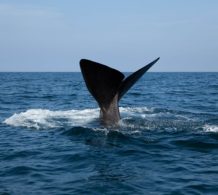 Sri Lanka, Excursion,Whales