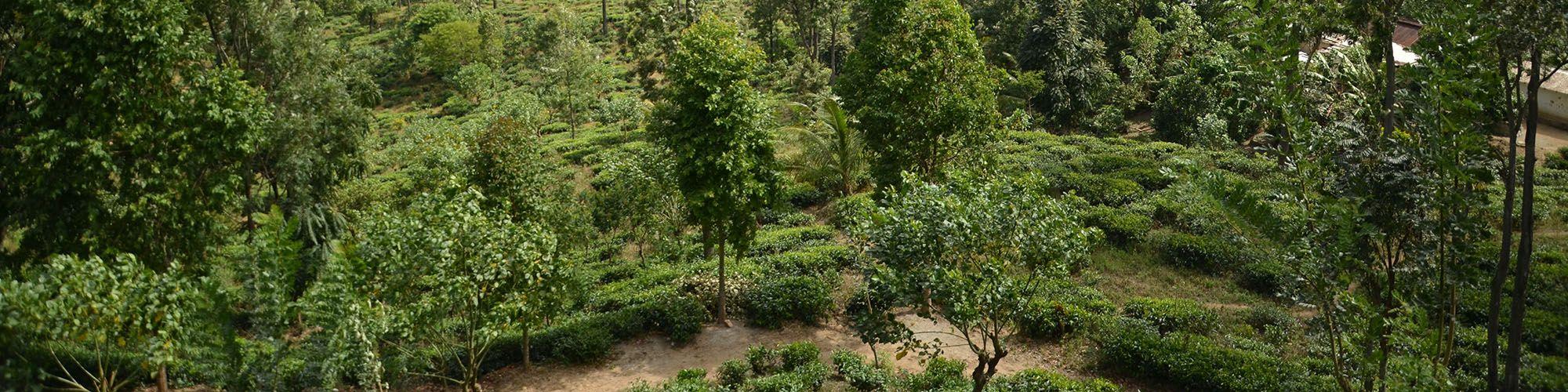 Sri Lanka, Hiking, Guide, Forests