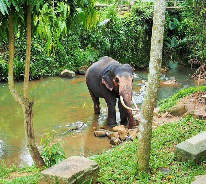 Sri Lanka, Kegalle, Elephant Foundation