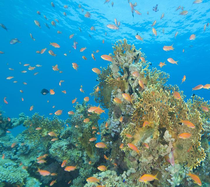 Sri lanka, diving tour, colombo