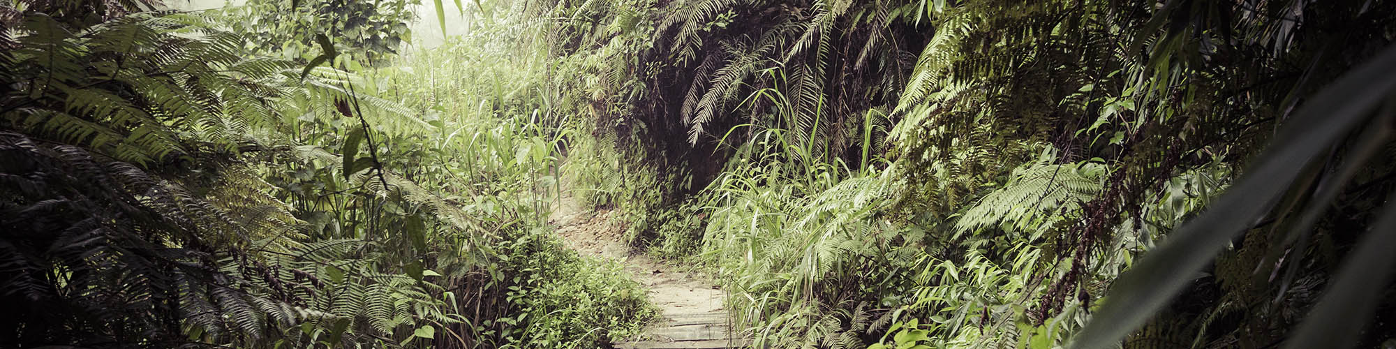 Tropical forest, Sinharaja, Sri Lanka