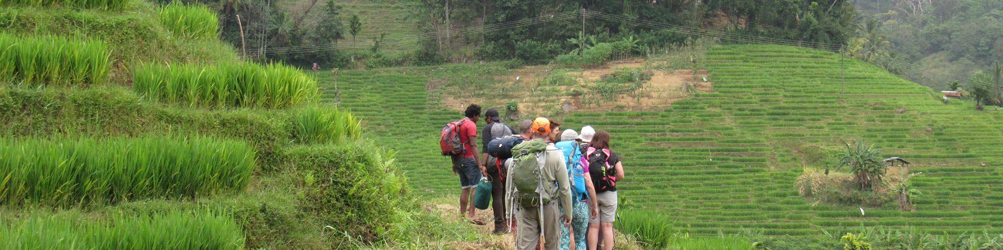Sri Lanka, Knuckles Mountain Range