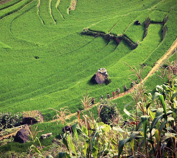 Trek, paddy field, Vietnam