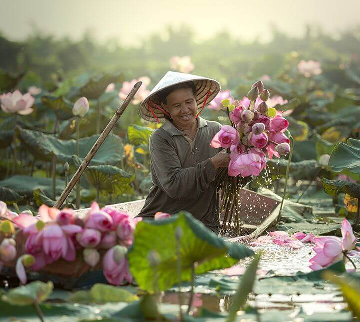 Vietnam, Farmer, Lotus flower