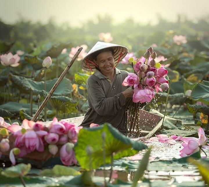 Vietnam, Farmer, Lotus flower