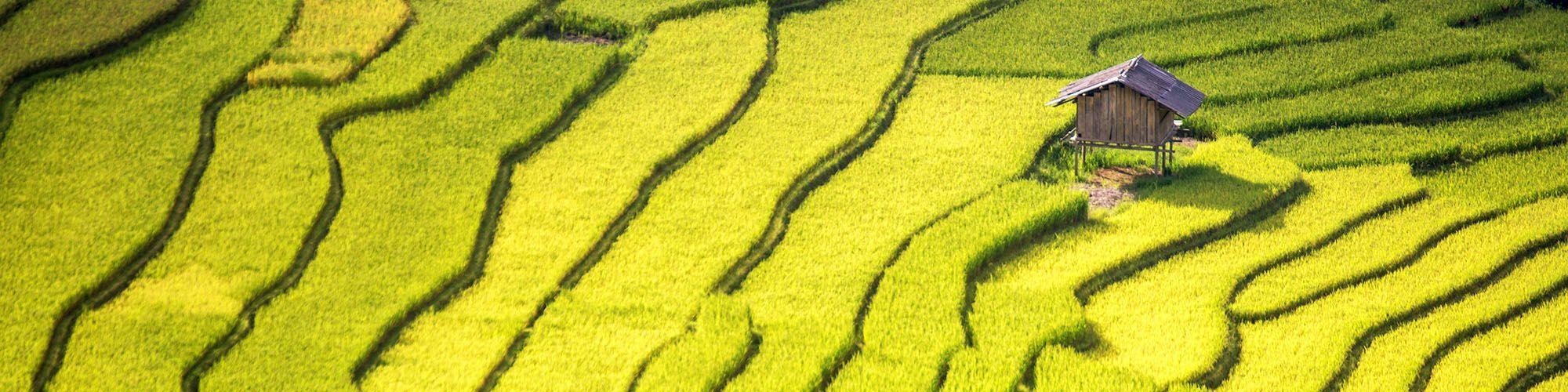 Vietnam, North, Sapa, Rice terraces